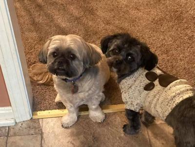 Benefit the Thomas J. O'Connor Animal Adoption, In-Studio or Zoom